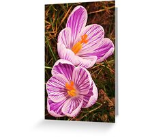 Crocus Back To Back Greeting Card
