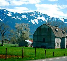 Springtime in the Fraser Valley, British Columbia... by Carol Clifford