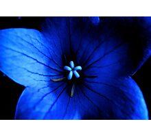Estrella Violeta 3 Photographic Print