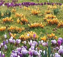 Spring Busting Out all Over by MichelleRees