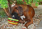 Mine! -Boxer Dogs Series- by Evita