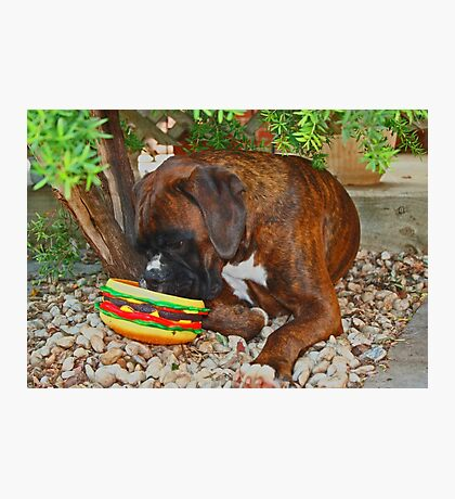 Mine! -Boxer Dogs Series- Photographic Print