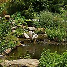 Pond in the Garden by Sandy Keeton