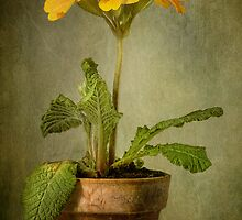 Potted up by Mandy Disher