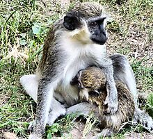 Nursing Monkey . by Lilian Marshall