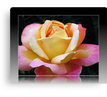 A Rose of Many Colours Canvas Print