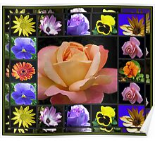 Summer Flowers Collage Featuring Rose Poster