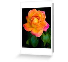 A Beautiful Arundel Rose Greeting Card