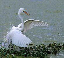 Avery Island Egrets--Stick Fisherman by Bonnie T.  Barry