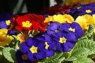 Happy Spring - Flowers in Blackheath Market by Allen Lucas