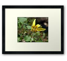Adder's Tongue (or Yellow Trout Lily) Framed Print