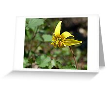 Adder's Tongue (or Yellow Trout Lily) Greeting Card