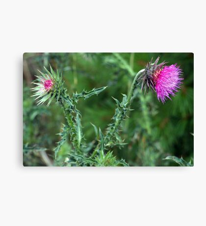 "The Common but Beautiful ""Musk Thistle""  Canvas Print"