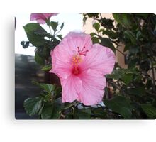 Springs Pink Delight, March Canvas Print
