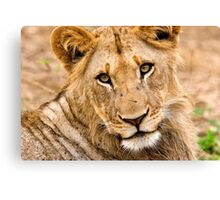 Look Into My Eyes! Canvas Print