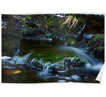 Rainforest Pure Poster