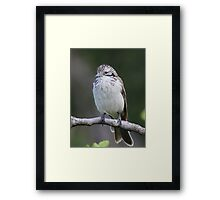 Striped Honeyeater Framed Print