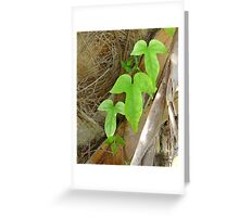 Vine on Palm Trunk Greeting Card