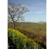 Yellow Tree Mountains - Trees in Virginia Photographic Print