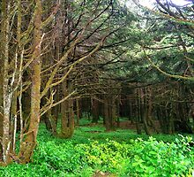 Into the Forest at Neptune Beach...Yachats, Ore by trueblvr