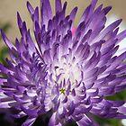 *Purple Mum* by Van Coleman