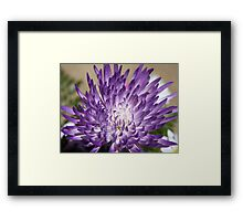 *Purple Mum* Framed Print