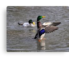 Hey! Your getting my wings wet! Canvas Print