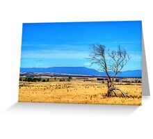 A lonely tree near Evandale, Tasmania Greeting Card