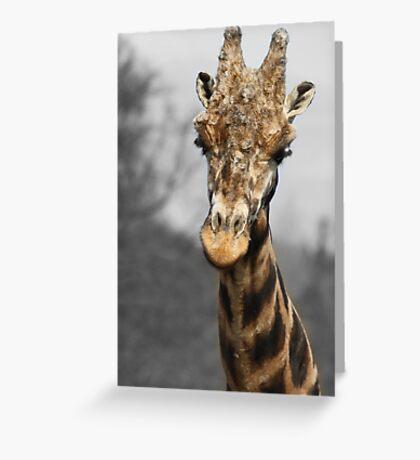 Giraffe at west midlands safari park Greeting Card