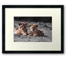 Baby Lion Cubs Framed Print