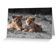 Baby Lion Cubs Greeting Card