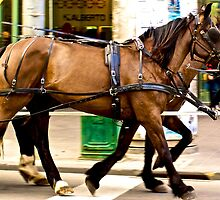 Horses on Swanston by OrsonKent