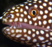 Moray Eel, Tonga by Sean Elliott
