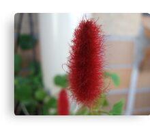 Red Macro Flower Canvas Print