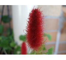 Red Macro Flower Photographic Print