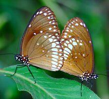 ENJOYING  THE LIFE (butterfly)  by Deepjay Sarkar
