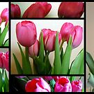 Tulips Stain Glass (204 views so far) by debbiedoda