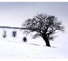 snow landscape Photographic Print
