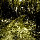Pathway by Richard Pitman