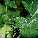 hydrophobic vegetable by sija