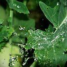 hydrophobic vegetable by sija