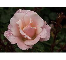 Rose and Rain - Soft Pink Raindrops Photographic Print