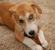 a chew toy by scott staley