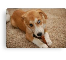a chew toy Canvas Print