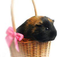 guinea pig  by Chukie