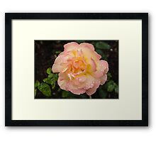 Rose and Rain - Pale Peaches, Pinks and Creams Framed Print