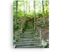 Forest Stairs Canvas Print