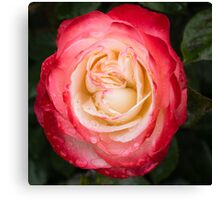 Rose and Rain - Pinks and Creams and Whites Canvas Print
