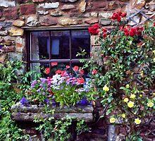 Cottage Window by Lynne Morris