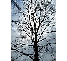 simply sycamore Photographic Print